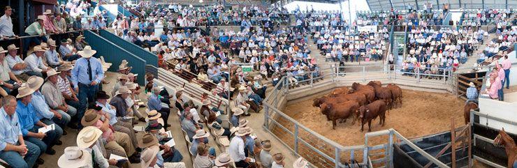 Beef Week sales
